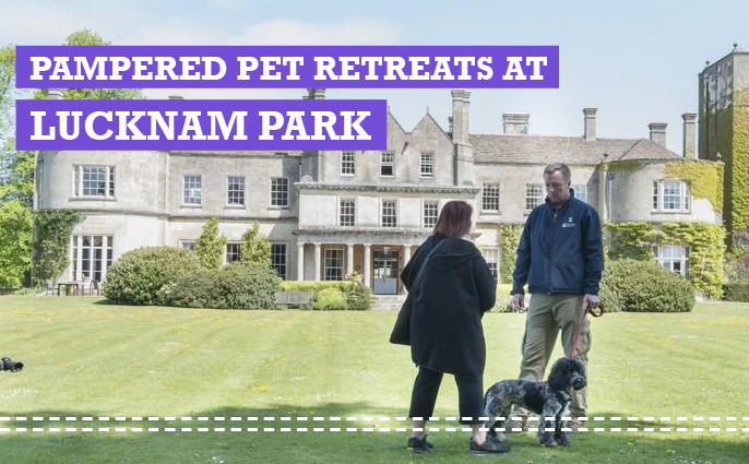 lucknam park luxury pet retreat