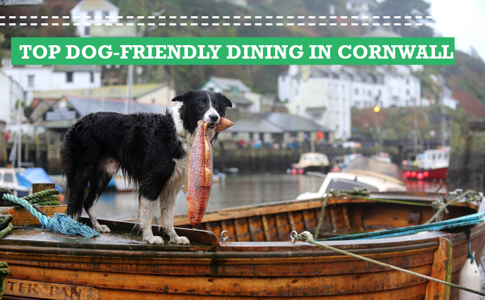 a guide to the best dog friendly pubs restaurants and cafes in cornwall